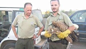 Agentes de Medio Ambiente de la Junta rescatan dos buitres leonados en la autovía A-7, cerca de Níjar