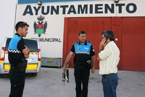 """La Policía Local de Pulpí, recupera una ejemplar de """"Águila Calzada"""", que se encontraba herido en una de sus alas"""
