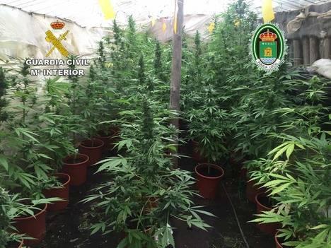 Un menor de 14 años entre los ocho detenidos con 300 plantas de marihuana