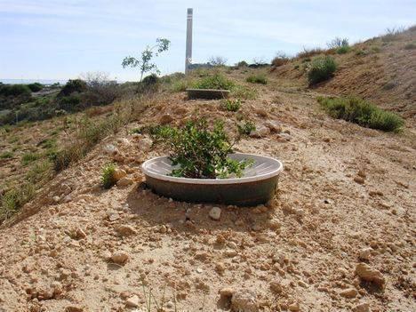El 96% de las especies reforestadas en la escombrera de Endesa en Carboneras arraiga con éxito
