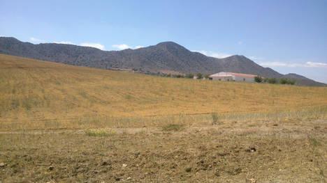 La sequía y las heladas ponen en peligro el sector productivo agrícola y ganadero del Levante almeriense