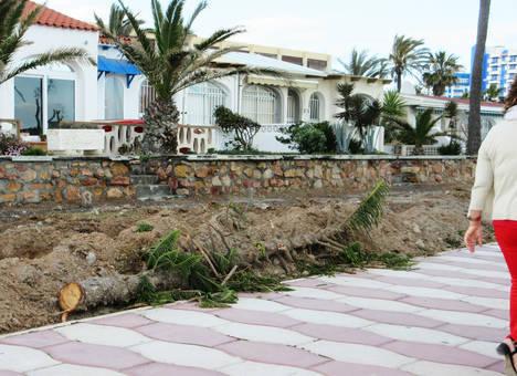 IU Roquetas alerta de la tala de árboles en la construcción del Carril Bici de Playa Serena