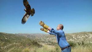 Medio Ambiente libera un águila culebrera y un águila calzada tras recuperarse de sus lesiones