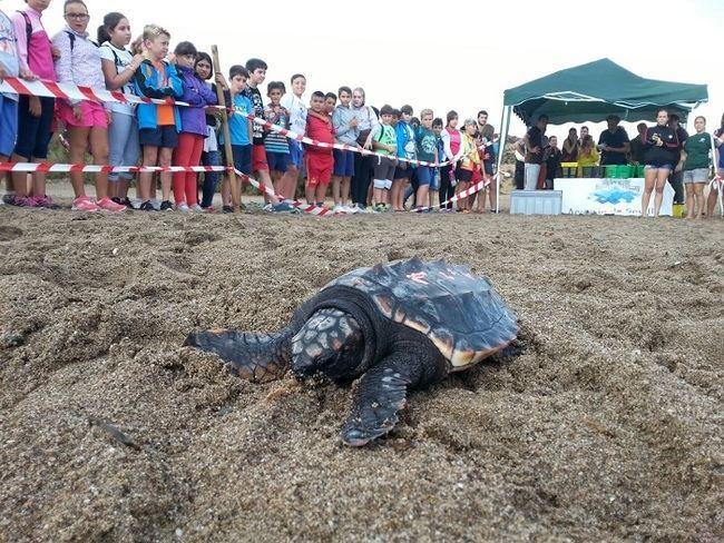 Talleres para atender los varamientos de cetáceos y tortugas marinas en Almería