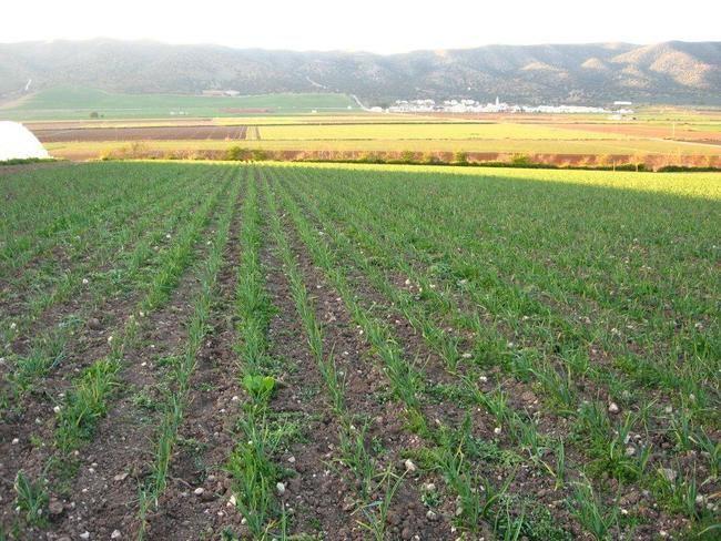 Agricultura participa en la regulación de fertilizantes y fitosanitarios permitidos en producción ecológica