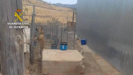 La Guardia Civil investiga al propietario de siete canes por un delito de maltrato animal