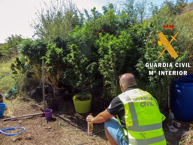 Guardia Civil localiza una plantación de marihuana en un cortijo de Mojácar