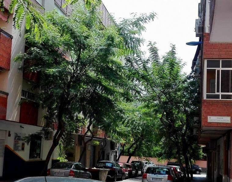 El PSOE advierte que hay vecinos que tienen que podar los árboles del barrio