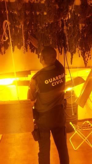 Guardia Civil localiza en Balerma 111 plantas de marihuana en proceso de secado