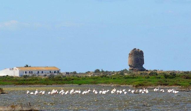 Junta celebra el 'Día Mundial de las Aves' en Punta Entinas-Sabinar