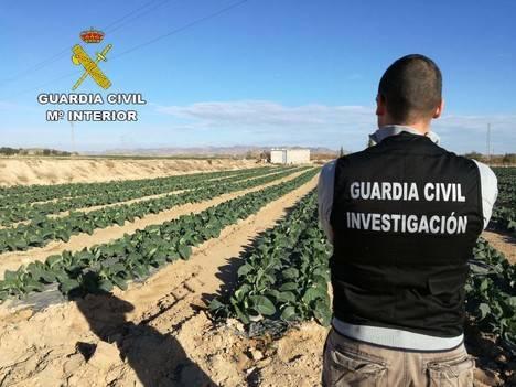 Un menor desaparecido de su casa resulta implicado en robos a explotaciones agrarias con dos jóvenes de Vera