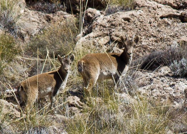 La Gestión Integral de los montes de Sierra Filabres generará unos 83.980 jornales directos