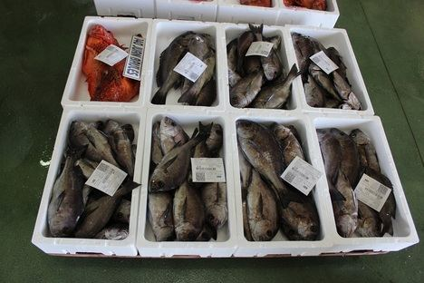 Almería es la provincia andaluza que menos pescado exporta