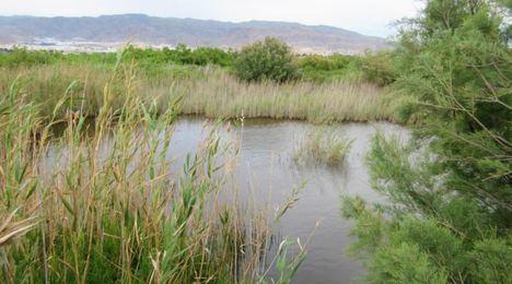 Cultura garantiza la tutela del patrimonio protegido en la Ribera de Algaida