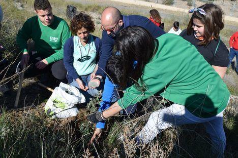 Nueva replantación de arbolado en la Sierra de Gádor