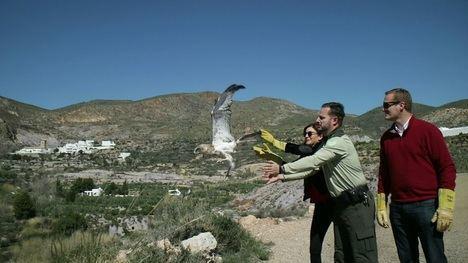 Un águila culebrera vuelve a volar por el valle de Huebro