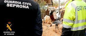 Más de 100 actuaciones contra el tráfico ilegal de especies protegidas en Almeria en 2017