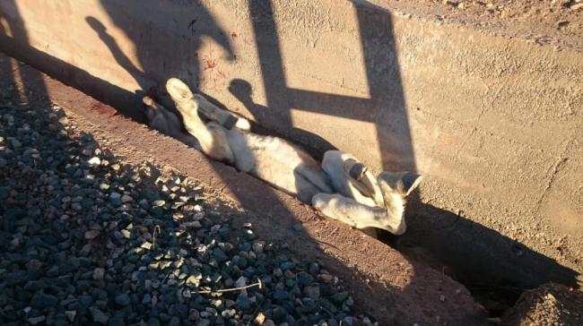 Los Bomberos de Almería rescatan de una yegua en Benahadux