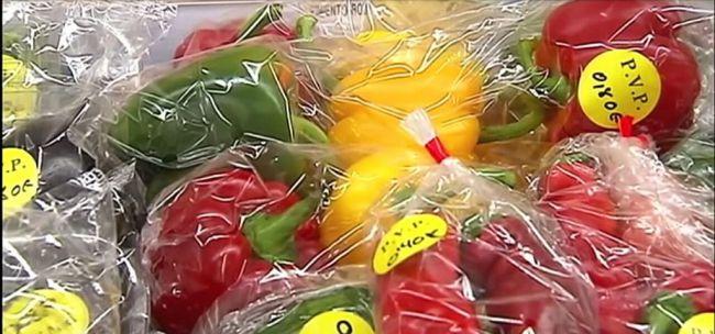 Almería es la provincia española que más legumbres y hortalizas exporta