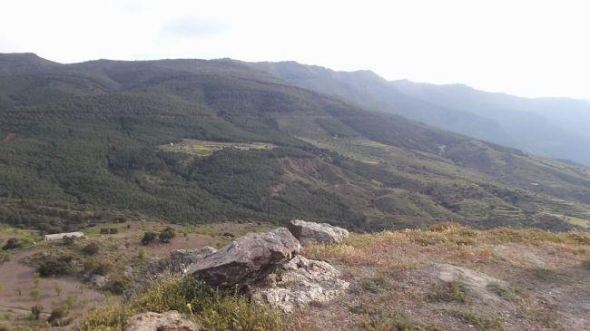 Ya se pueden solicitar ayudas forestales