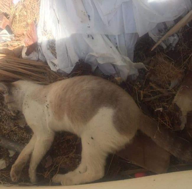 El Ayuntamiento de Mojácar estaría pagando 40 euros por gato muerto