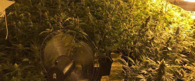 Plantación subterránea de 1.200 plantas de marihuana
