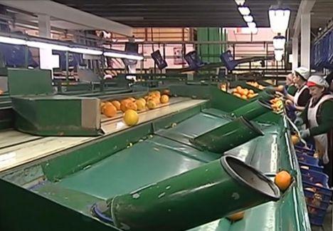 Cooperativas Agroalimentarias se suman al paro del día 19