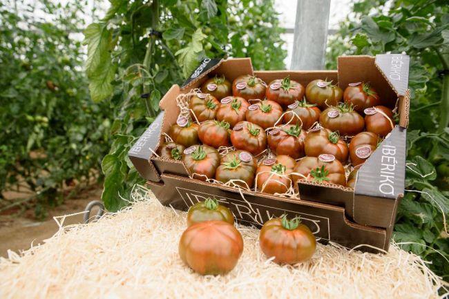 Medidas fitosanitarias para aislar el virus rugoso del tomate