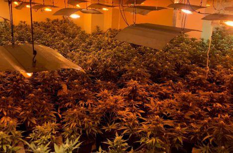 Usan una vivienda blindada para cultivar marihuana