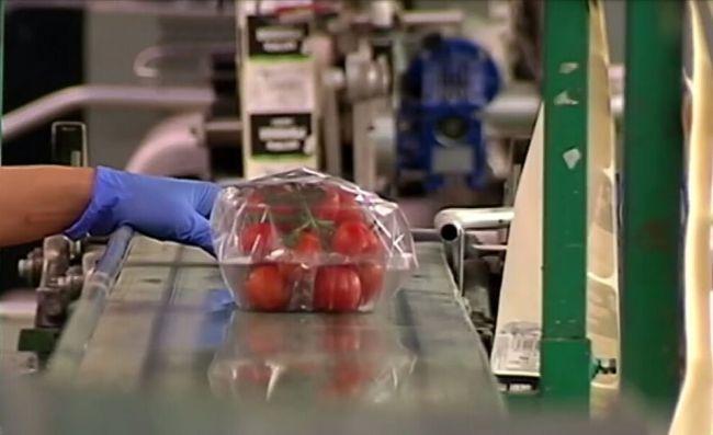 El precio del tomate cae un 29% en esta campaña