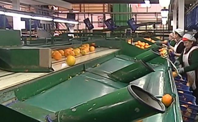 UPA demuestra que hay precios por debajo del coste de producción