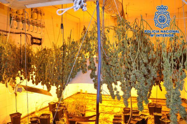 Desmantelado un 'secadero' de marihuana en un garaje de Almería