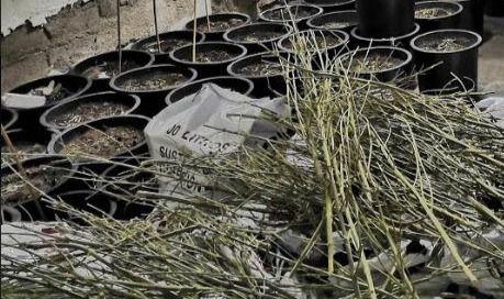 La Infancia De Vícar Se Cita Para Una Plantación De Árboles