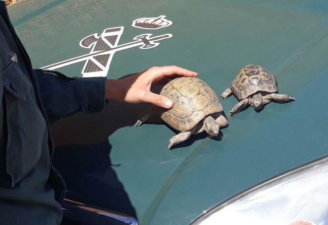 La denegación para extraer áridos por la tortuga mora no afectará a las obras del AVE