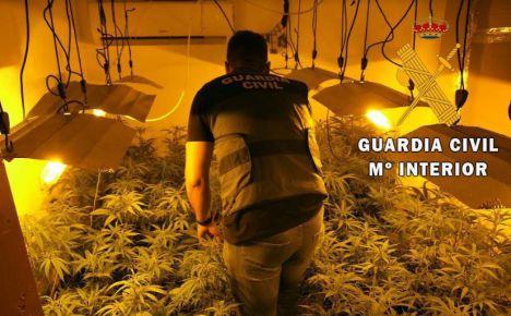 522 plantas de marihuana en tres viviendas del mismo edificio en La Mojonera
