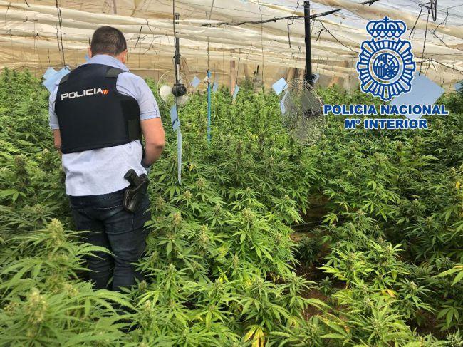 Un detenido por tener una plantación de marihuana a la que se accedía por un butrón