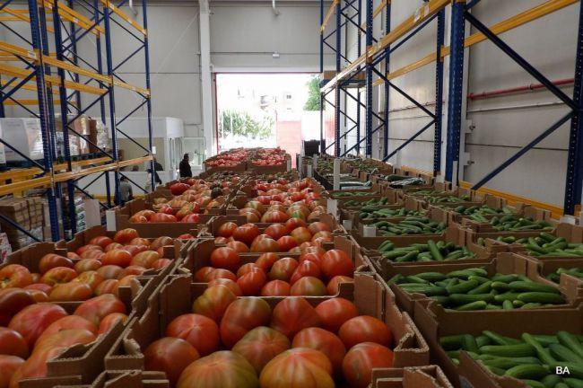 La malla de sombreo aumenta los niveles antioxidantes del tomate ecológico