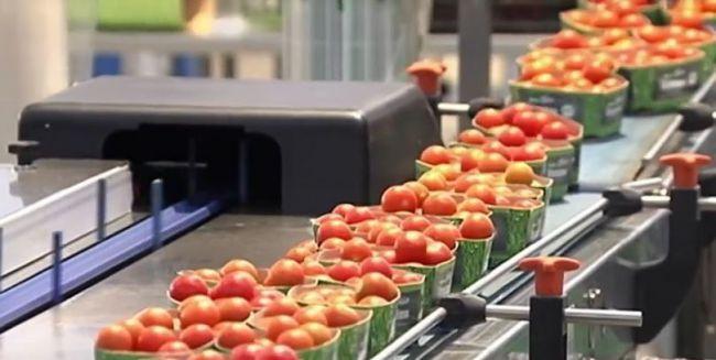 China es el país que más producción hortícola compra en Andalucía