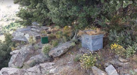 La UAL idea un sistema utilizando abejas como 'centinelas' de la contaminación