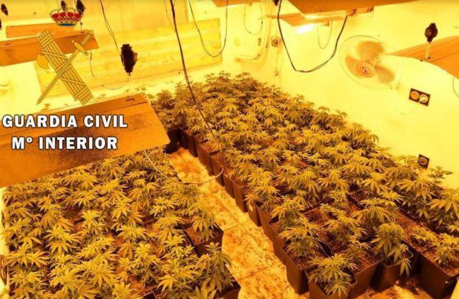 Dos detenidos con 360 plantas de marihuana en una vivienda de Roquetas