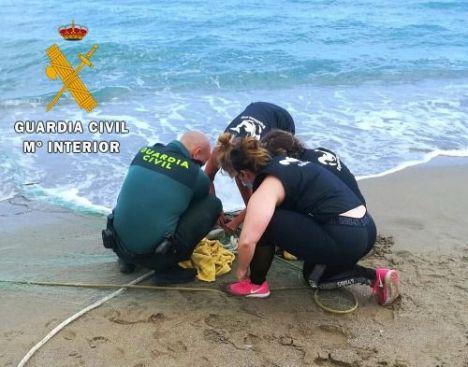 Guardia Civil y Equinac sueltan la tortuga boba Arturo