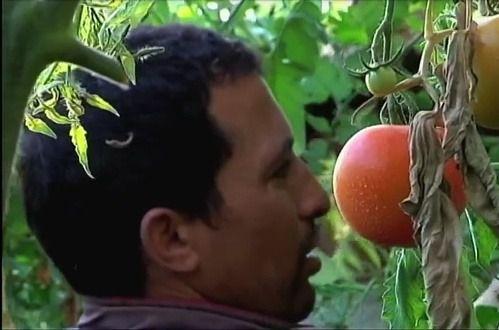 El fin de la campaña agrícola se une al turismo y Almería es la segunda provincia que más desempleados suma