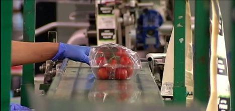 CCOO convoca un paro en Agroponiente por un despido y varias sanciones