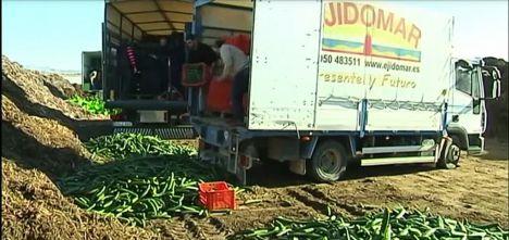 El sector hortícola de Almería retirará del mercado el 30% de pepino
