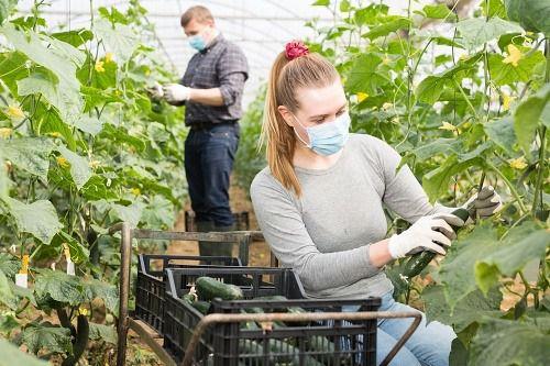 Agricultura invierte 10,92 millones de euros en modernización de invernaderos