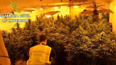 Plantas de metro y medio en una vivienda destinada a cultivar marihuana en La Mojonera