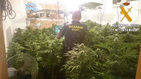 10 viviendas convertidas en macrofactoría de marihuana en Roquetas