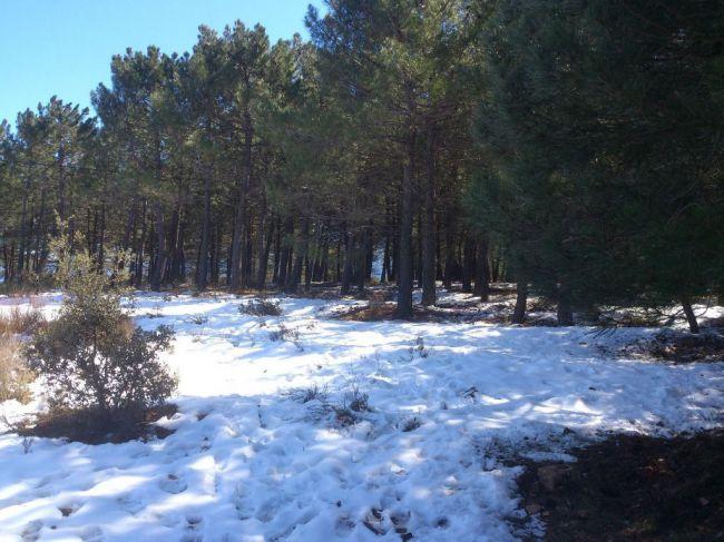 Almería también es nieve