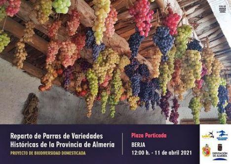Reparto de parras de veinte variedades históricas de uva de mesa en Berja