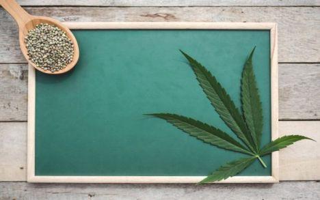 Los diferentes tipos de semillas de marihuana